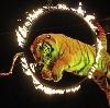 Цирки в Болохово