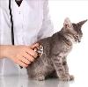 Ветеринарные клиники в Болохово